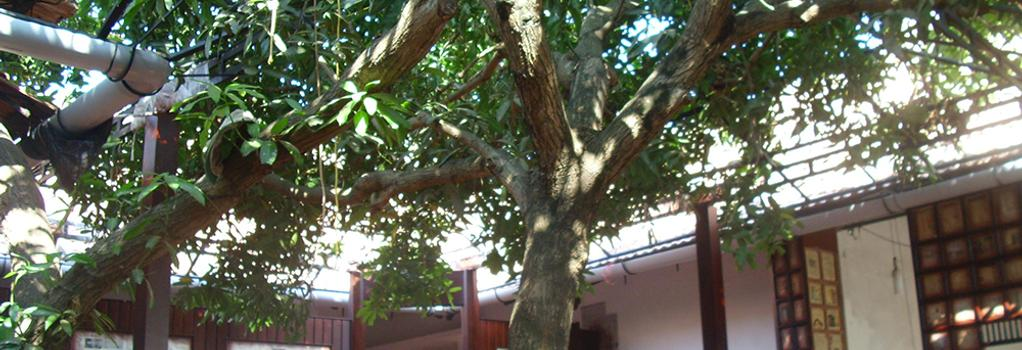 The Mango Tree Inn - Kochi - Restaurant