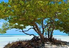 Albury Court Hotel - Key West - Key West - Pantai